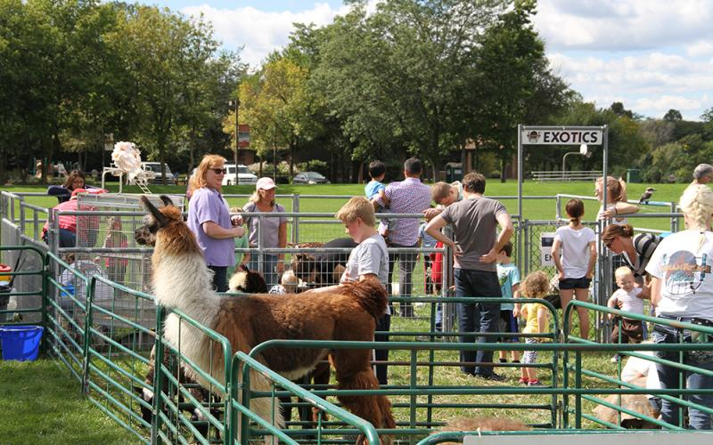 Petting Zoo at Autumn Fest