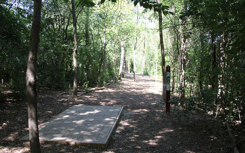 Disc Golf Hole 7
